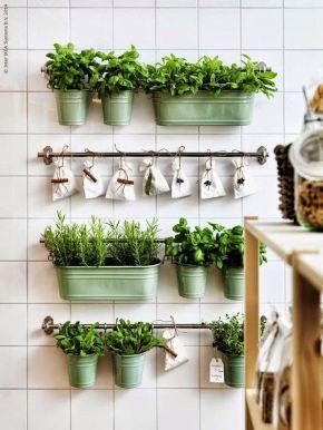 vegetacion cocina