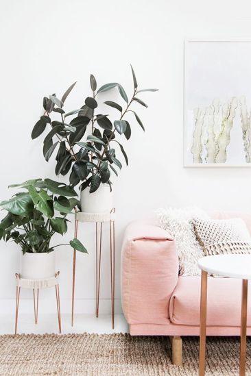 vegetacion con rosa