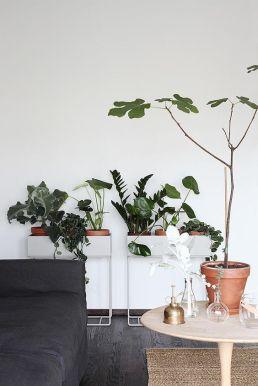 vegetacion salon