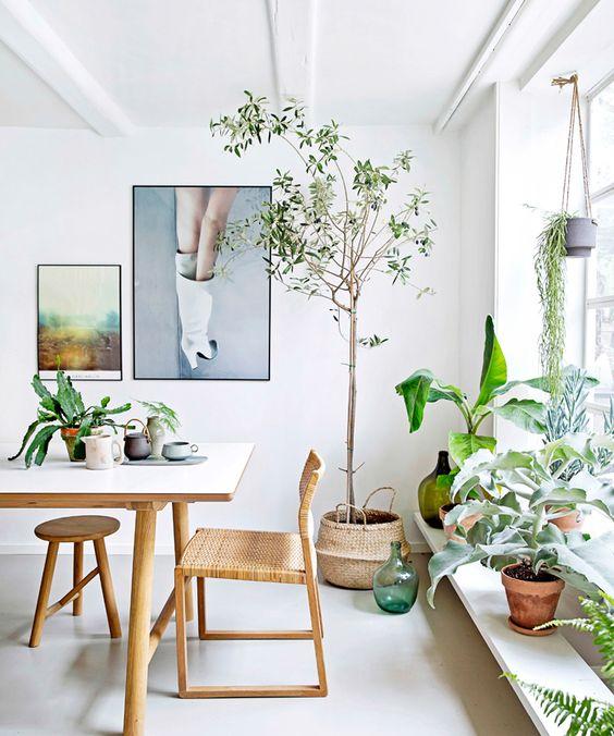vegetacion6