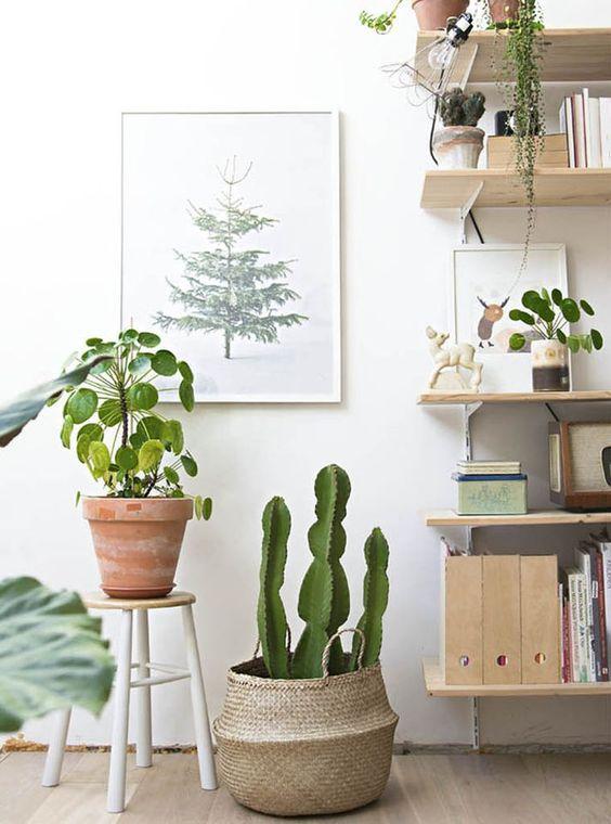 vegetacion cactus