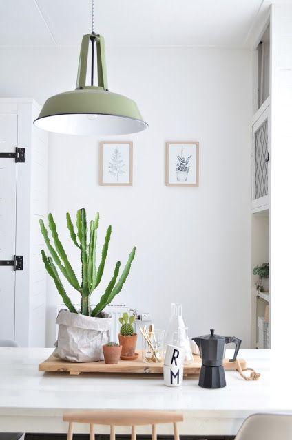 vegetacion en mesa